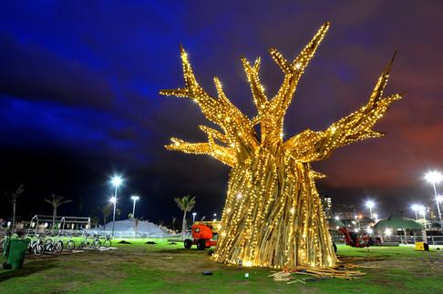 DANIEL POPPER / BAOBAB TREE / COP 17 SIEMENS : DURBAN SOUTH AFRICA 2011