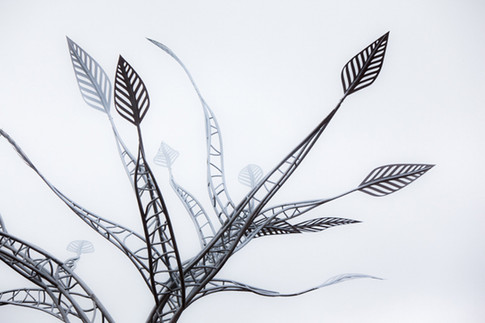 DANIEL POPPER / TREE OF WISDOM / NELSON MANDELA TREE OF WISDOM 2015 : MVEZO EASTERN CAPE SOUTH AFRICA