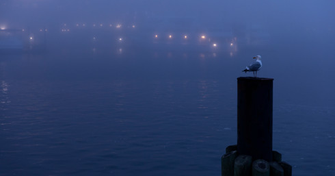 Segal and the Fog