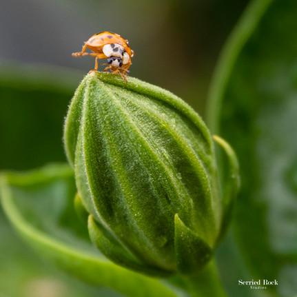 Ladybug Stretching