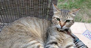 חתולים בסלסלה