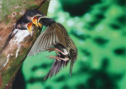小鳥に餌を与える親鳥