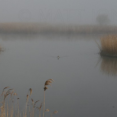 Misty morning on the Marsh