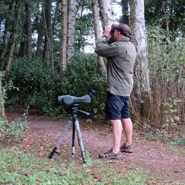 A Kentish woodland