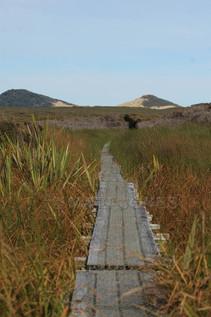Trail to Mason Bay