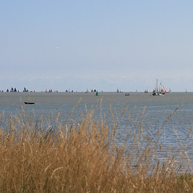 Sails on The Swale