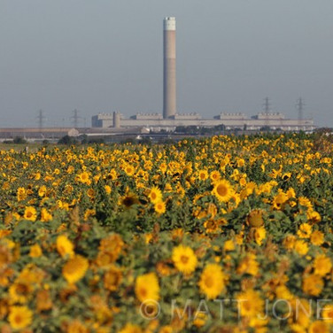 Sunflower Factory