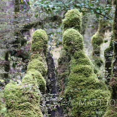 The Moss Family