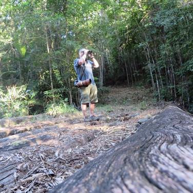Birding in the Daintree rainforest
