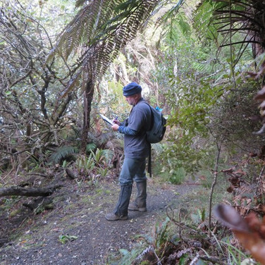 Forest bird call counts