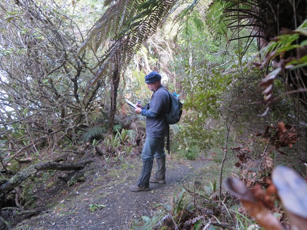 Forest bird call counts Stewart Island NZ, 2014