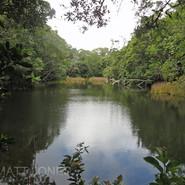 Mount Lewis - Rainforest Pond