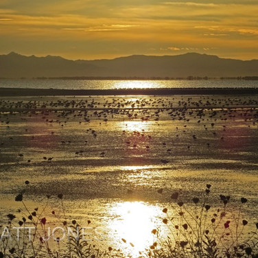 Wader Sunrise
