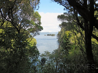 Paterson Inlet from the bush