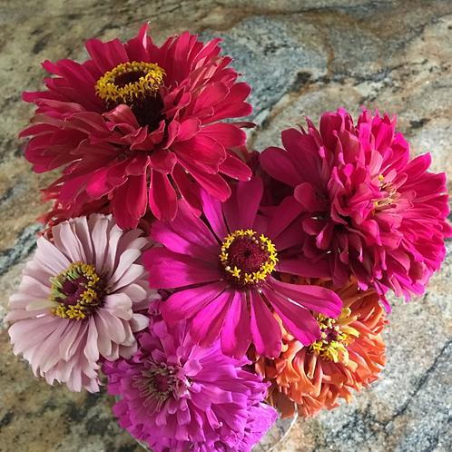 ZINNIAS Big Flower Mix