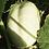 Thumbnail: CUCUMBER White Wonder