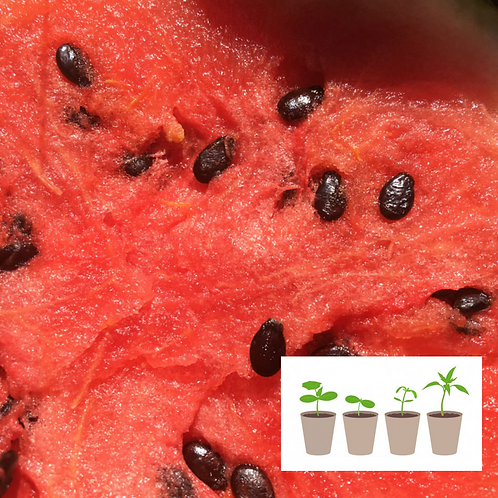 Mixed Watermelon (2 pack)