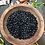 Thumbnail: COMMON BEAN Cherokee Black Pole Beans