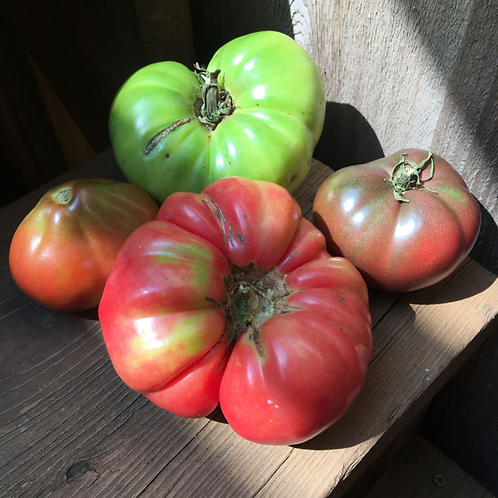 TOMATO All Welcome