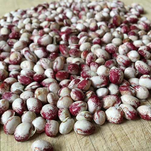 COMMON BEAN Mayflower Bean