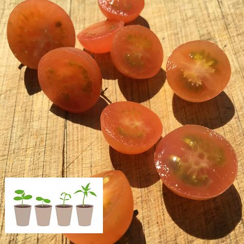 Peach Cobler Cherry Tomato (2 pack)