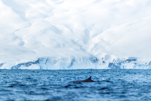 @hugograndcolasphotography_-_Fin_Whale_-
