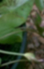 Lotus leaf on background of stones