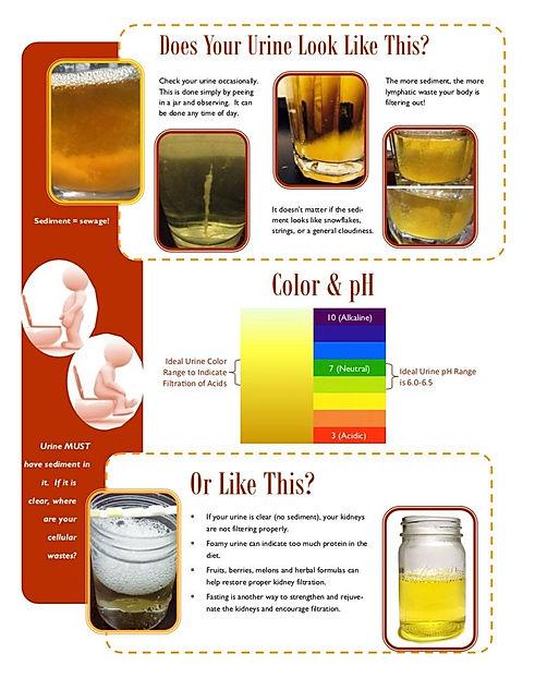kidney filtration pdg.jpg