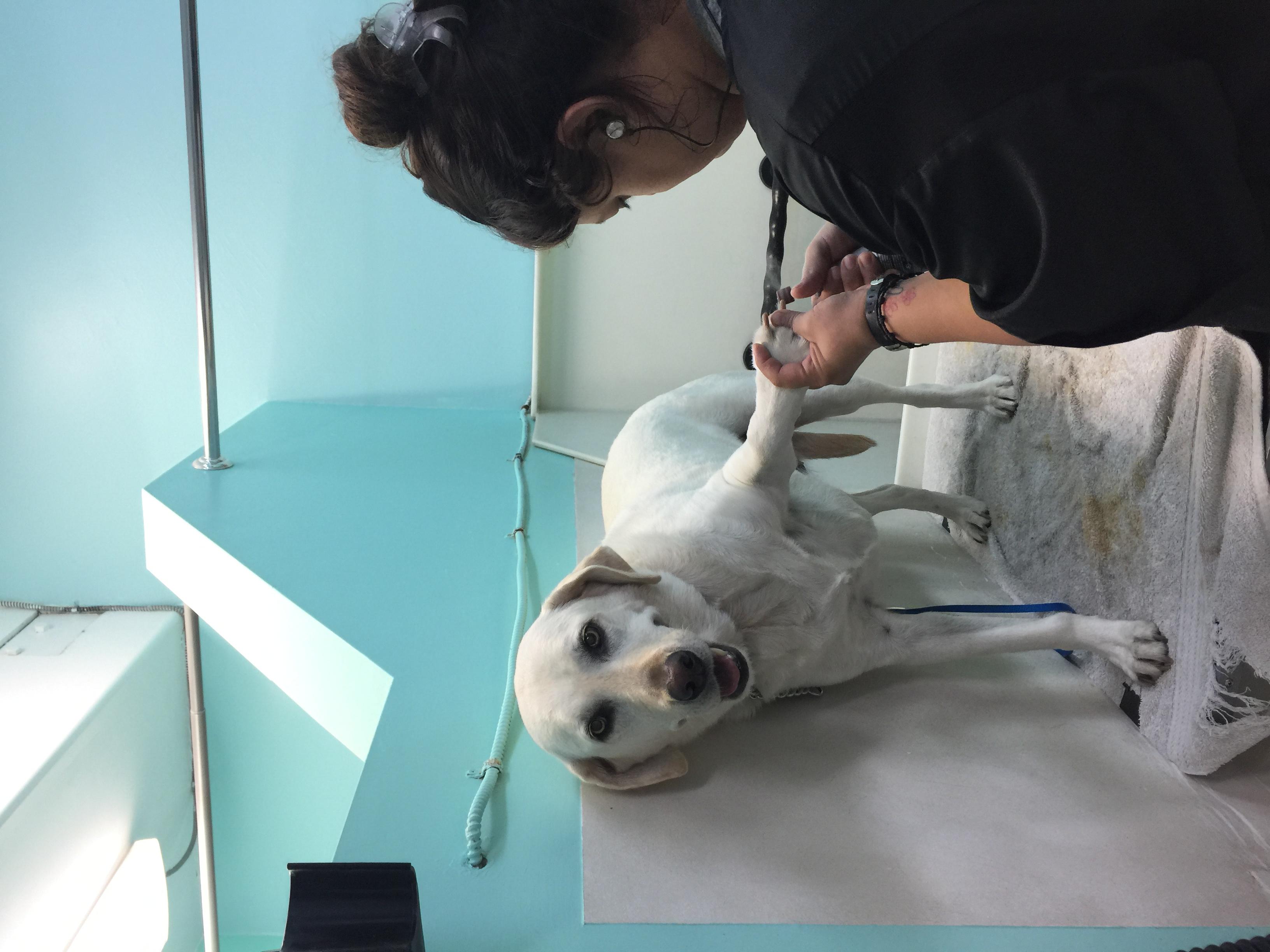 Daisy - nail trim