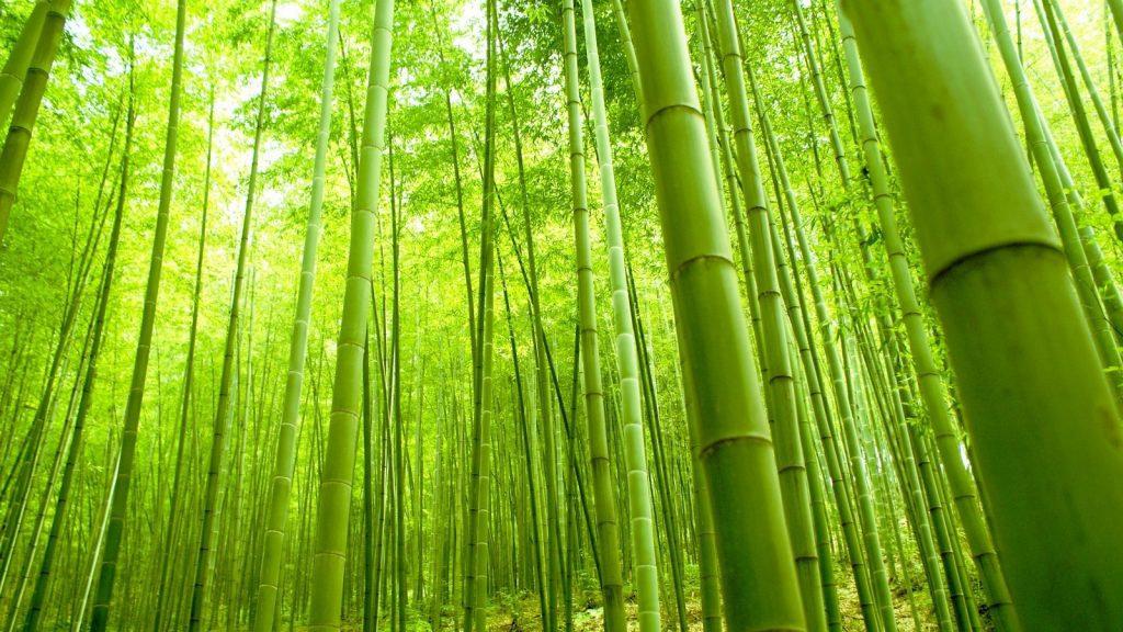 bambu-5-1024x576.jpeg
