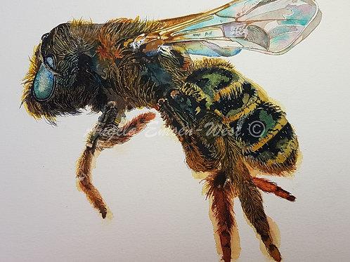 Buzzy bee.