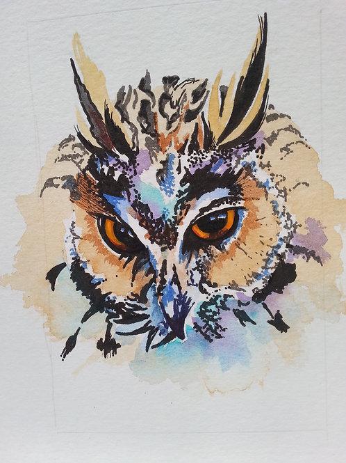 Long eared owl 2.