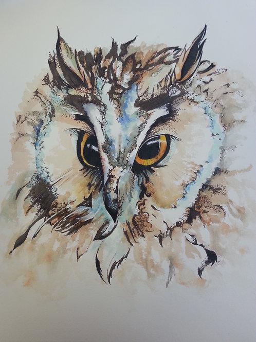 Long eared owl 3