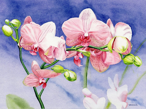 Orchids Original Watercolor 17x12 inches