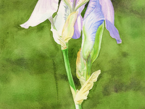 Purple Iris Floral Art for Interior Design