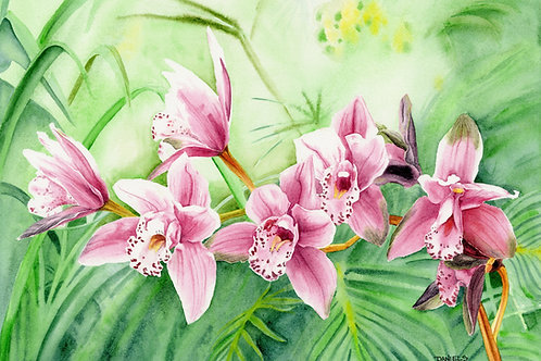 Pink Orchids Original Watercolor 17x12 inches