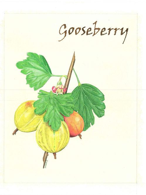 Gooseberry Art Print