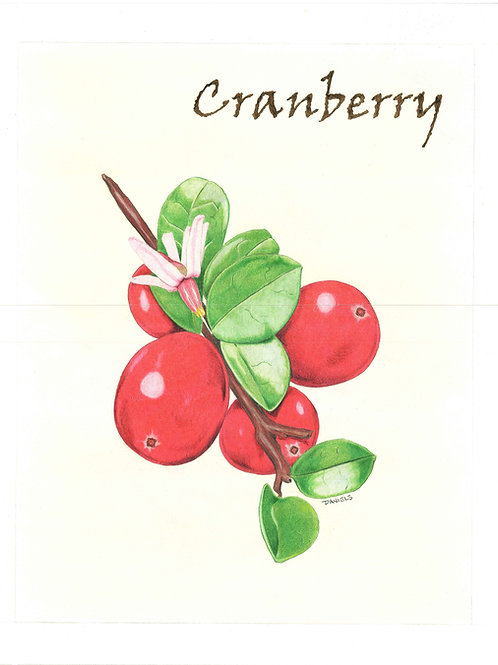 Cranberry Art Print