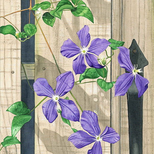 Purple Clematis Original Watercolor 14.5x18 inches