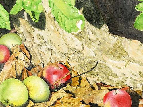 Lost Harvest Original Watercolor 16x13 inches
