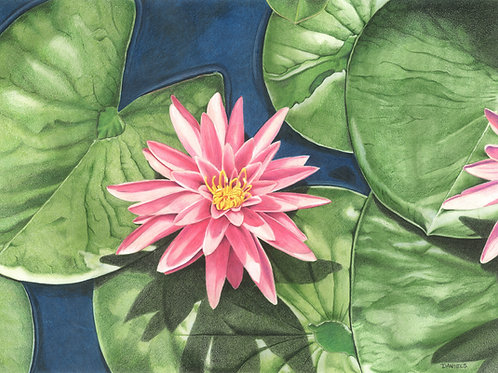 Water Lilies Original Watercolor 17x12 inches