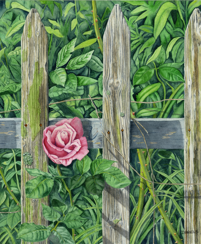 Urban  Rustic Rose