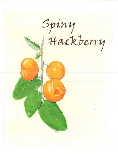 Spiny Hackberry Print
