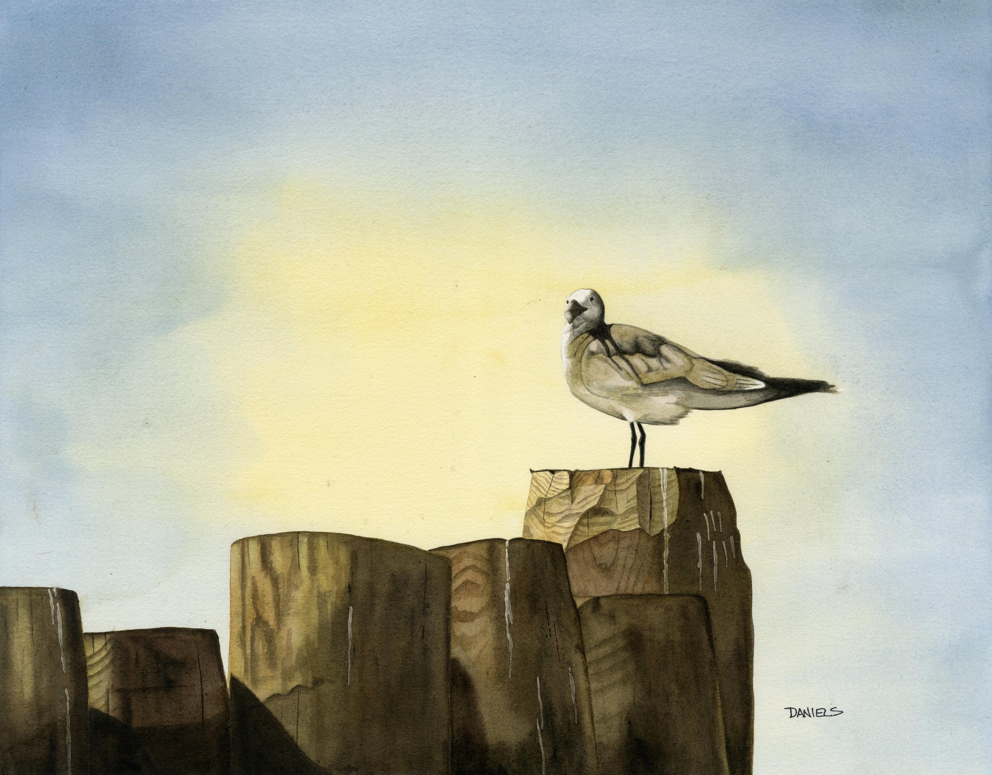 Ocracoke Seagull