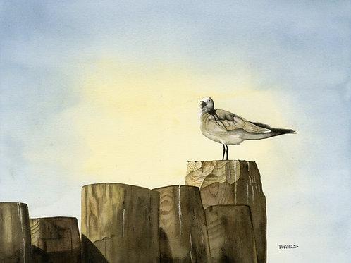 seagull art, beach art, beach decor