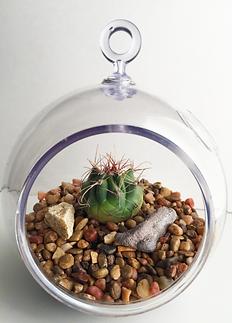 Mini Desert Terrarium Globe