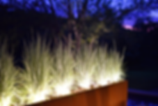 Outdoor Plant Lighting 2