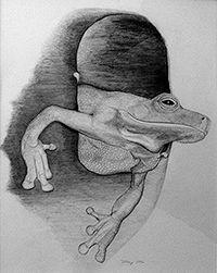 200croppedemerging frog IMG_1542.jpg
