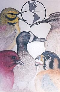 BirdingForFunMigrationsUSE.jpg