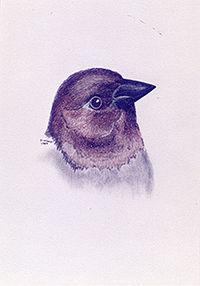 200croppedNeighborhood Birds Brown-heade
